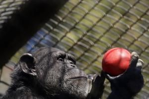 Correction: Virus Outbreak-Struggling Zoos story