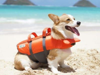 The 4 best dog life jackets in 2021, with advice from veterinarians and water safety experts