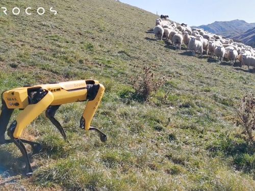 Boston Dynamics' robot dog has a new job herding sheep in New Zealand - here's how it works
