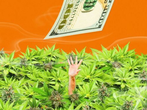 2 top cannabis investors say their best advice is to buy stock in cannabis companies held back by a weird rule