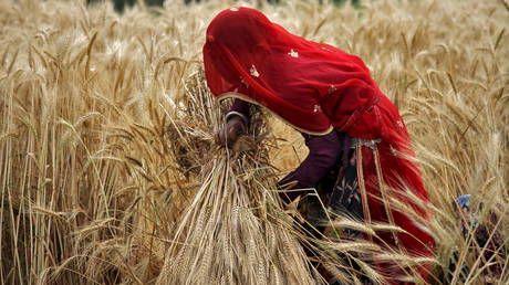 India on track to have its largest wheat harvest ever