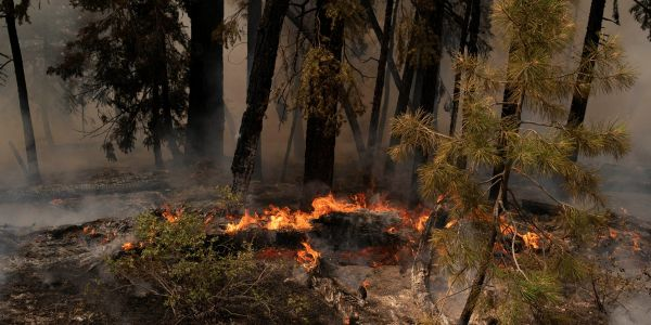 Lumber prices spike as wildfires cause producers to cut output, citing 'significant' supply chain challenges