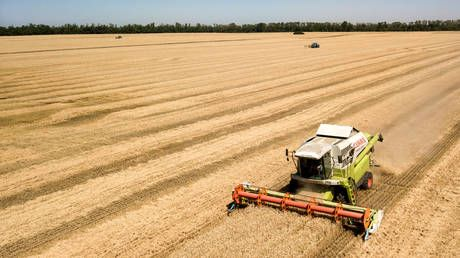Russian farmers about to reap bumper grain harvest - USDA