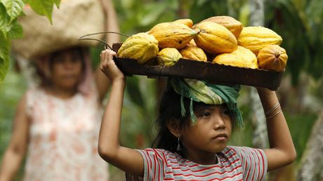 Most of world's chocolate comes from labor of 1.5 MILLION children, some as young as FIVE - study