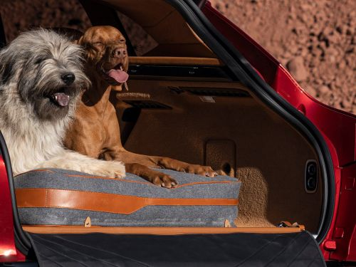 Aston Martin's first-ever SUV will have outrageously luxurious options like one for pet owners that includes a portable pet washer