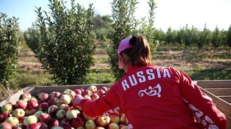 Russia's agricultural exports could top $30 BILLION this year